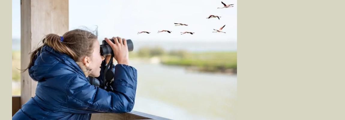 """Projekto Erasmus+ """"Birds without Borders"""" paukščių stebėjimo ir paukščių nuotraukų konkursas """"Nuostabūs paukščiai"""""""